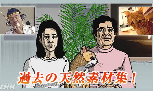NHK総合「天然素材NHK」放映